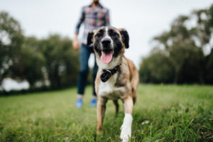 A dog and owner on a park. A dog injury lawyer can help be very helpful